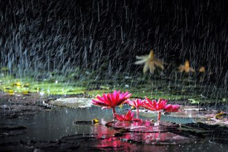 Rain v